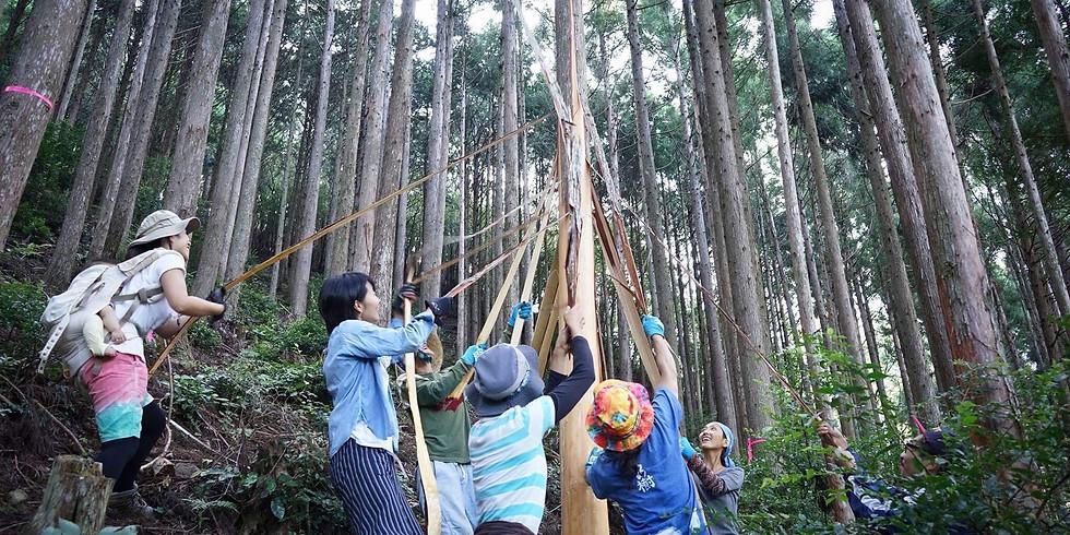 森林をまもる「皮むき間伐」のお手伝い