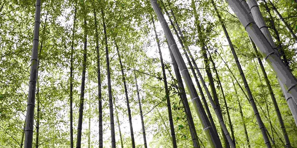 竹林伐採のお手伝い