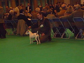 crufts20and20pups20march200920046.jpg