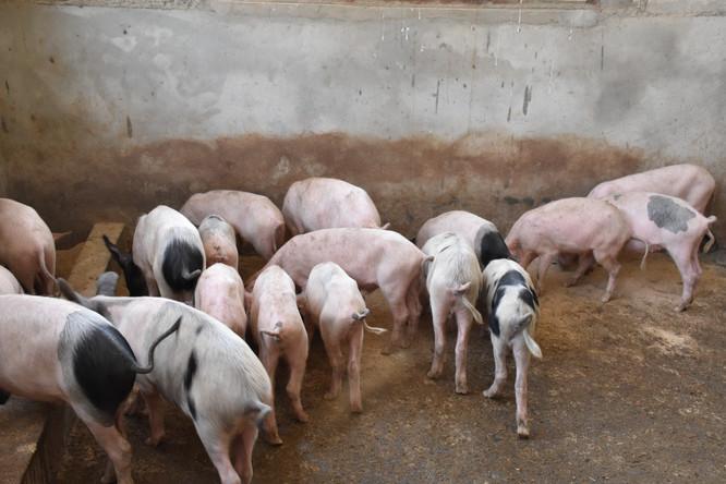 Raising Animals, Growing & Cooking Food, Gathering Water