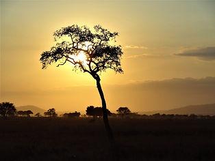 africa-1979222_1920.jpg