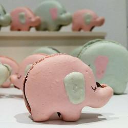 baby elephant macarons