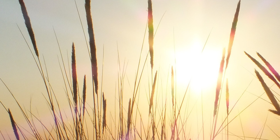 Free Meditation: Exploring the Joyful Vision of Pure Awareness