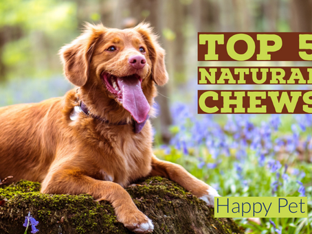 What are the Best Natural Dog Treats Out There? [Top 5 Single Ingredient Chews]