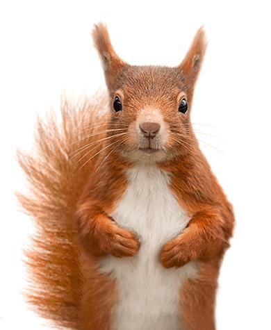 Toronto Amp Gta Wildlife Pest Removal Inline Wildlife