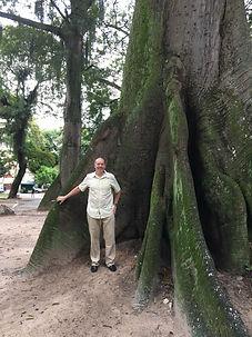 The Amazon's amazing trees