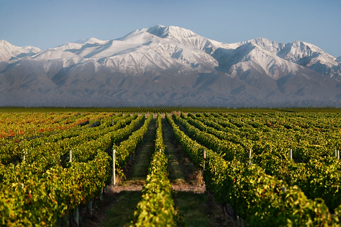 Wines of Argentina and Chile March 29 @ 7:00 PM