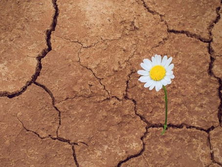 Meeting Failure and Defeat with Self-Compassion