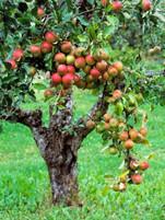 A Fruitful Tree