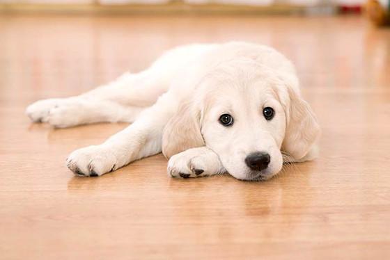 Whats The Best Pet-Friendly Floor?