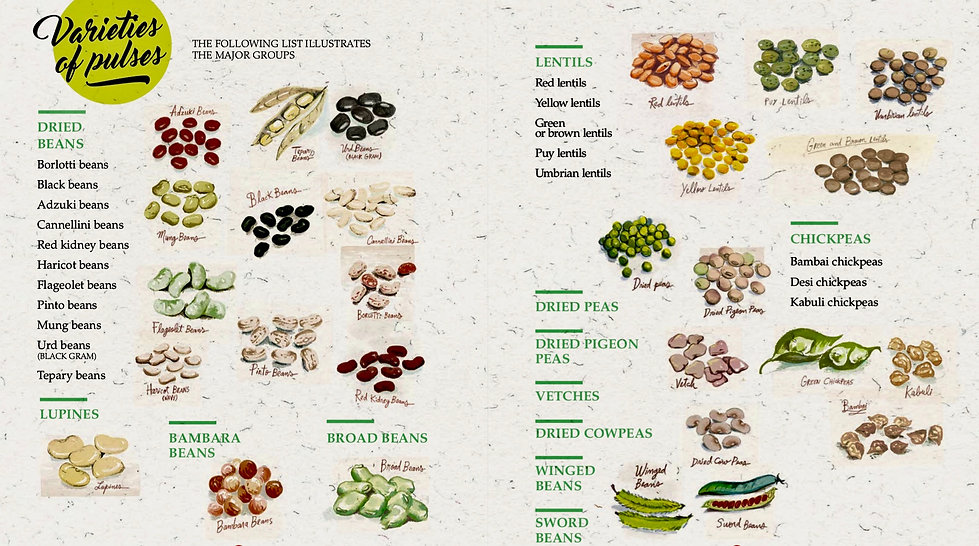 FAO Varieties of Pulses.jpg