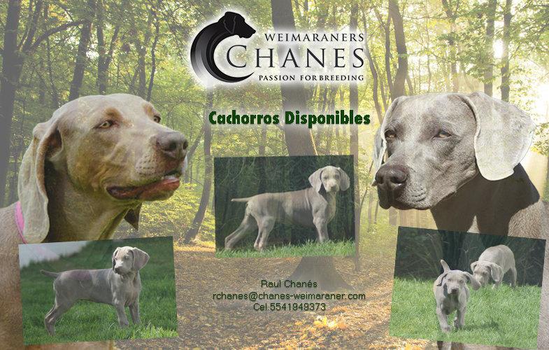 Cachorros 24 Agosto.jpg