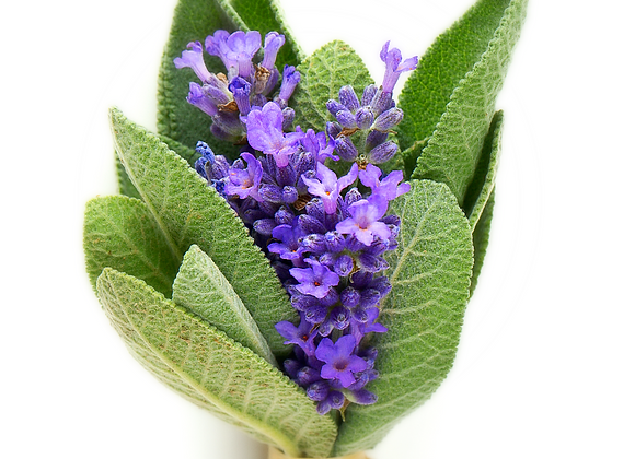 Lavender Sage