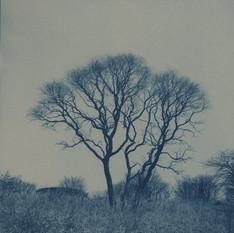 no.15 「Cyanotype」