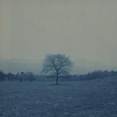 no.14 「Cyanotype」