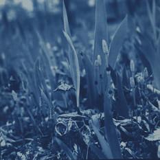 no.11 「Cyanotype」