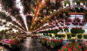 Orleans Garden Center Unique Annuals Hanging Baskets and House Plants