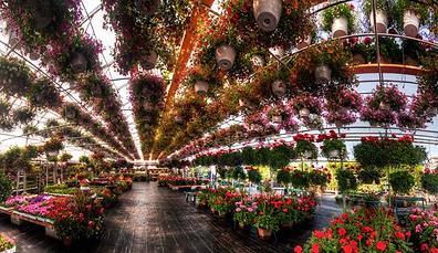 Ottawa's Best Garden Centre