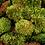 Thumbnail: mood moss