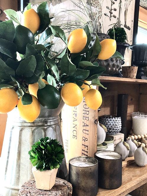 citrus branch