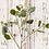 Thumbnail: silver dollar eucalyptus stem
