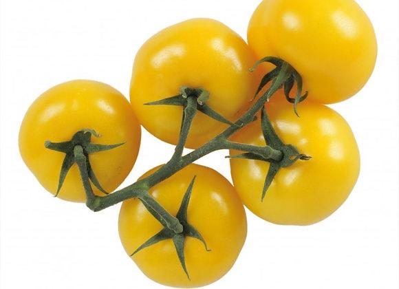 Plant de tomate cerise, pot Ø 11