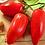 Thumbnail: Plan de tomate andine cornue, pot Ø  11