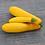 Thumbnail: Plant de courgette jaune pot Ø 11 cm