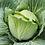 Thumbnail: Plants de choux à choucroute * 6