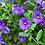 Thumbnail: Solanum tige