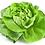Thumbnail: Plants de laitue * 6