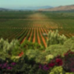 ensenada wine country.jpeg