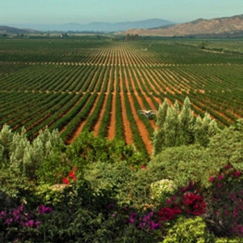 ensenada wine country.jpeg