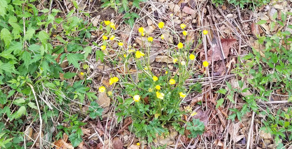 4 13 19 flower yellow.jpg