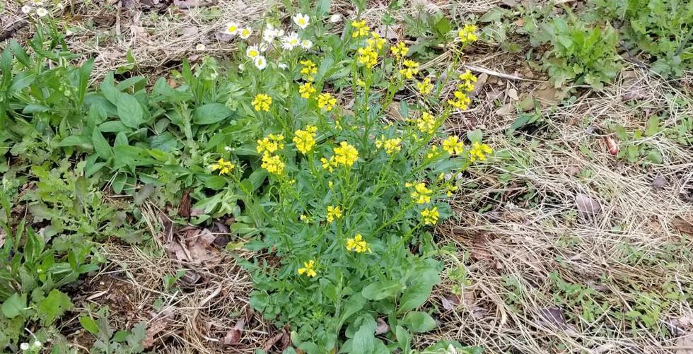 4 19 flower.jpg