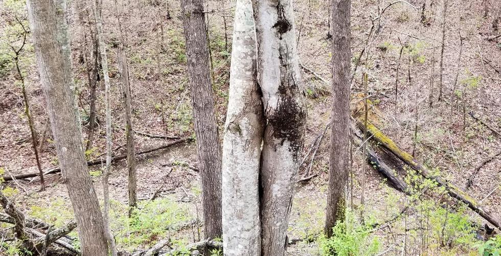 4 19 tree.jpg