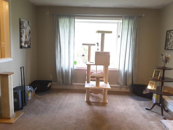 Sitting room fireplace-window-BEFORE.jpg