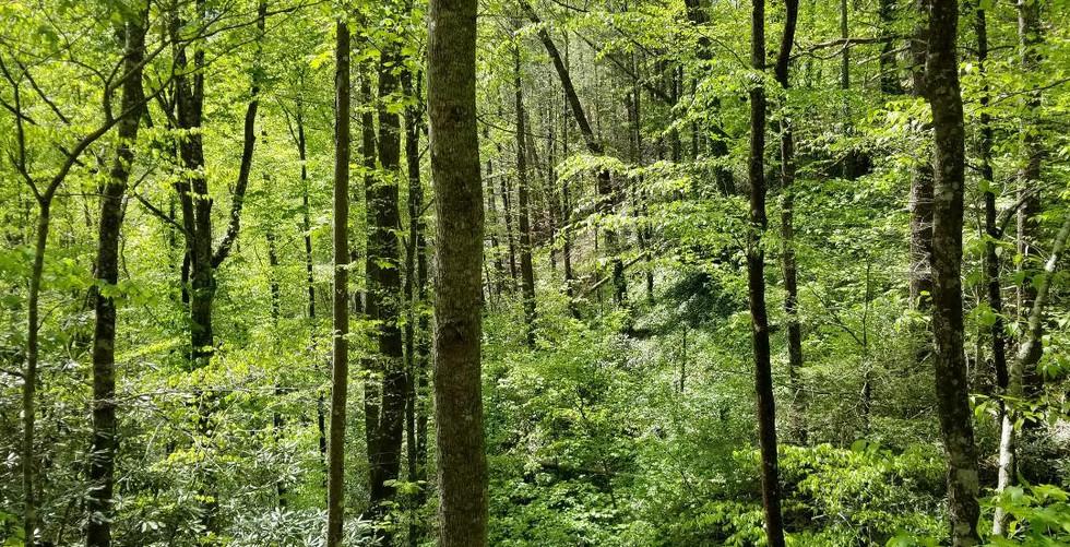 4 19 woods.jpg