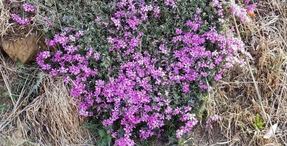3 21 2019 purple (2).jpg