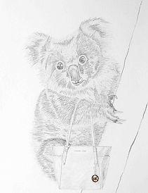 My Koala_1_small.jpg