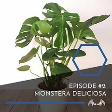 ListeningToPlants-02 (1).png