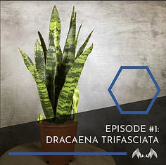 listening to plants EP01.jpg