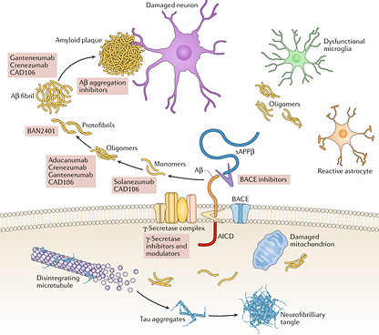 damaged neuron process.png