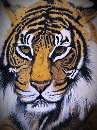 my%20hand%20paited%20tiger_edited.jpg