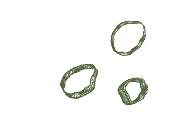 spring onion slices.png