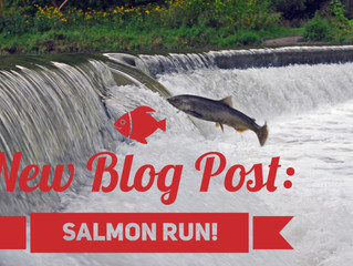 Salmon Run! Start Running...well Swimming