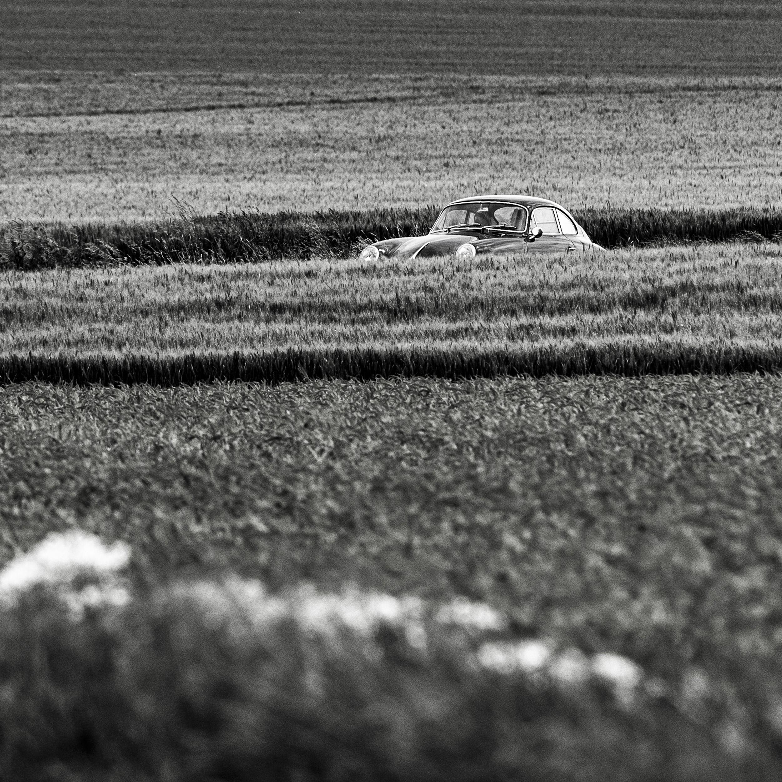 Field    (Cat N° 7191)