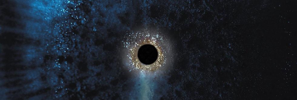 Black Radish 44   (Cat. N° 6998)