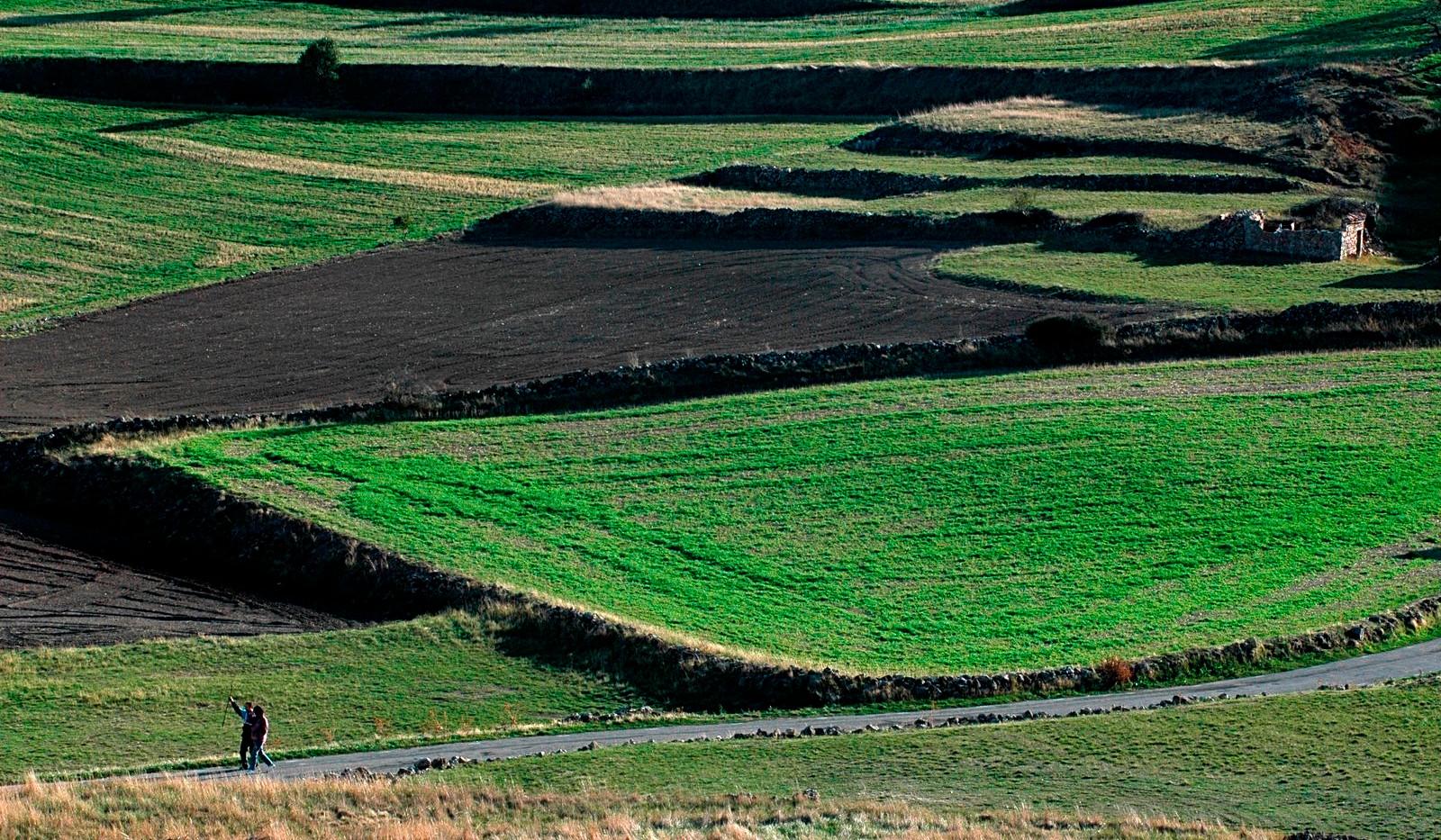 Campos verdes / Agricultural fields