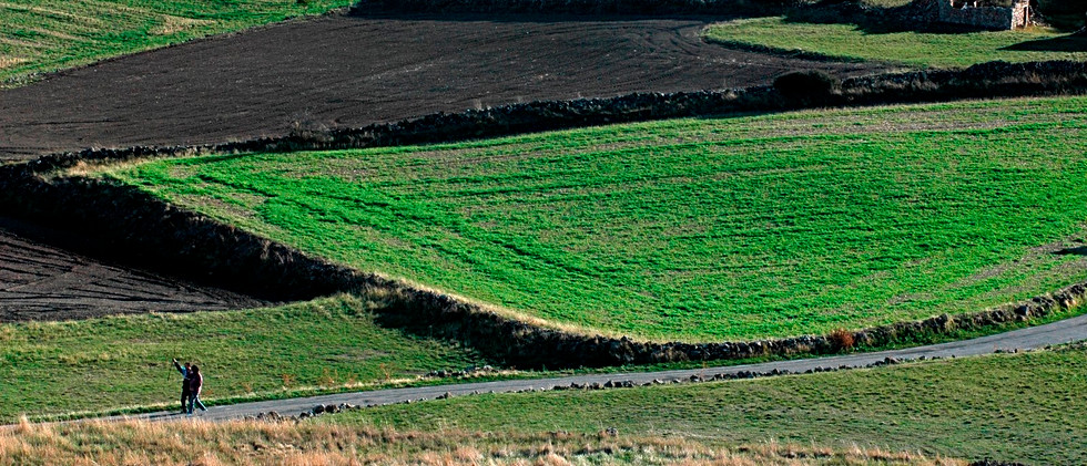 Campos verdes / Agricultural fields
